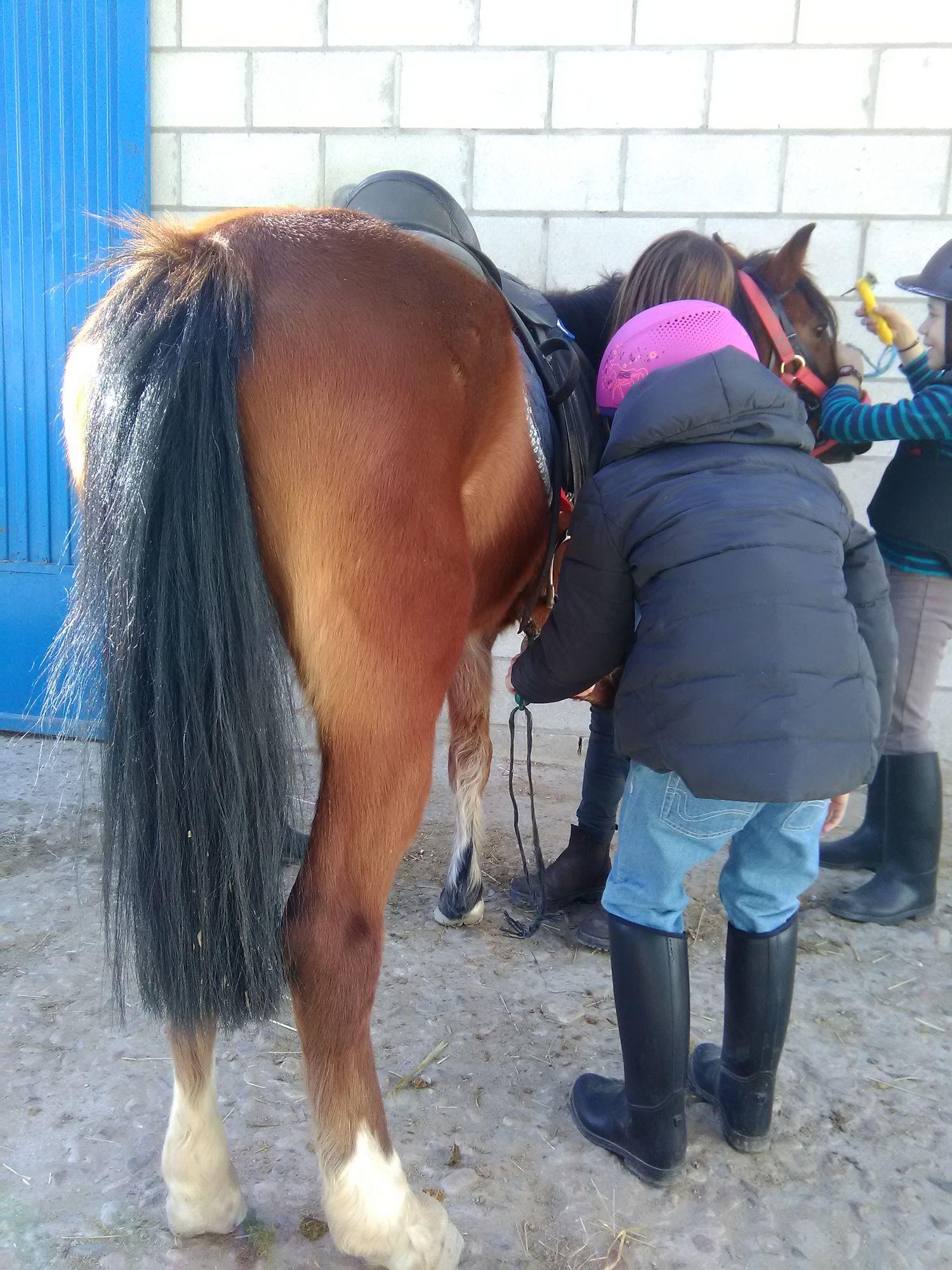 equitacion_02