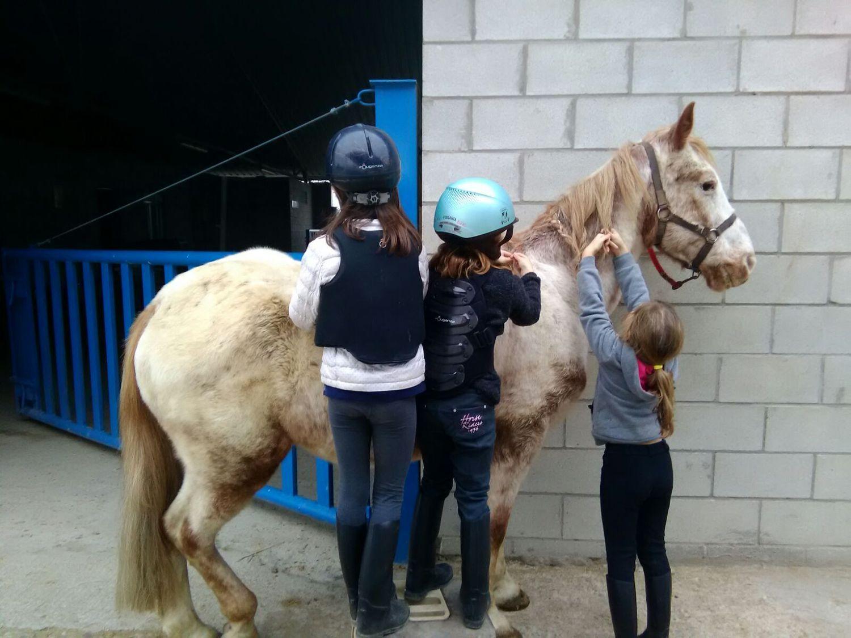 equitacion_15