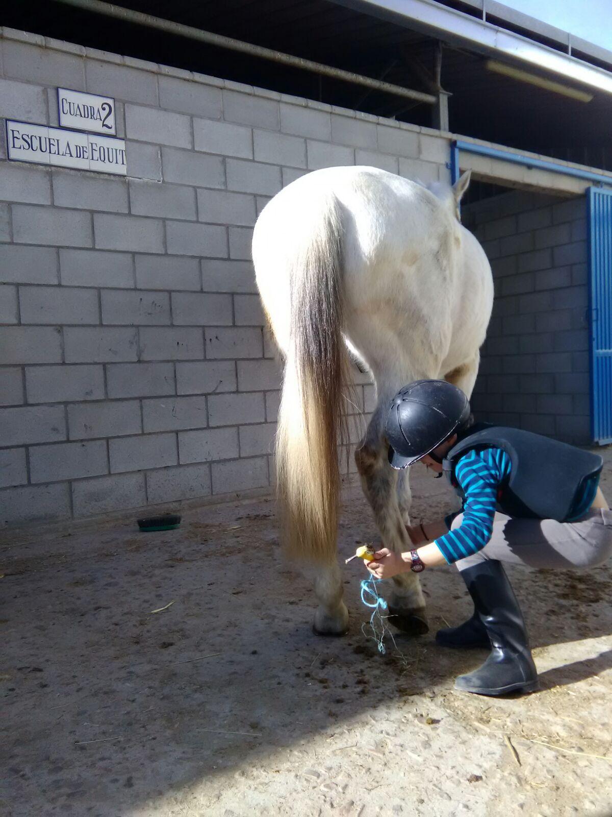 equitacion_18