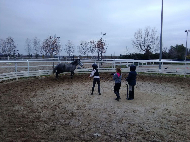 equitacion_19
