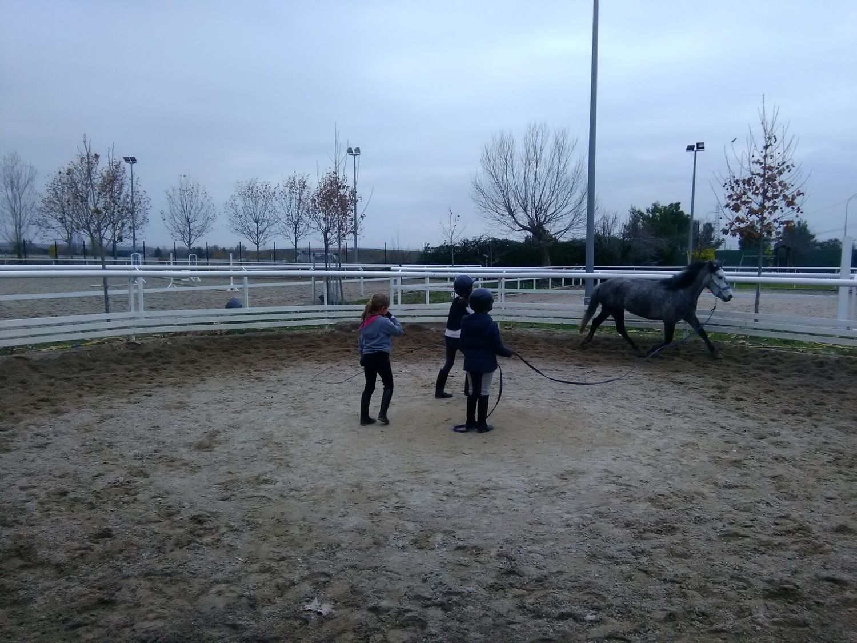 equitacion_20